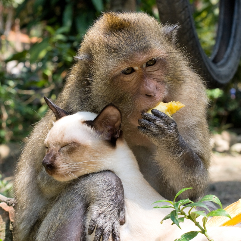 Find some zen with a macaque pal.